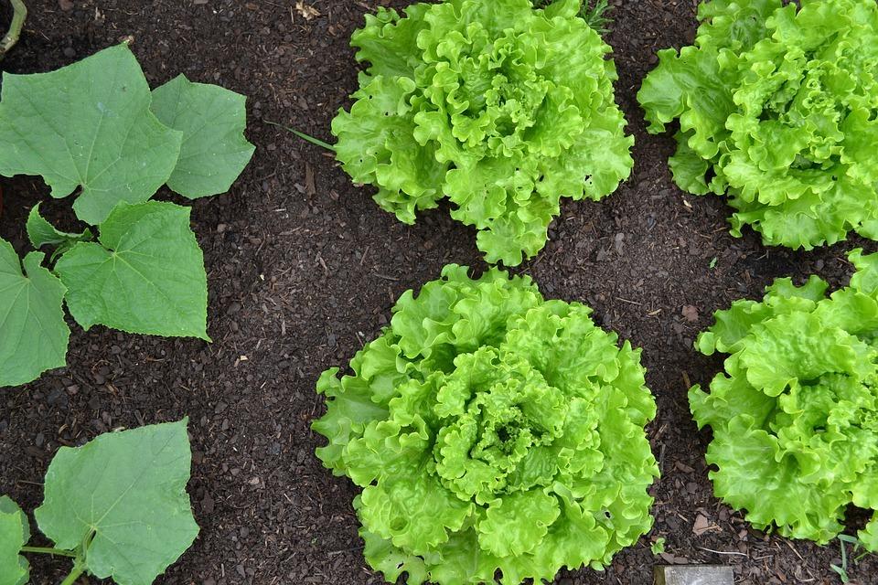 edible crops